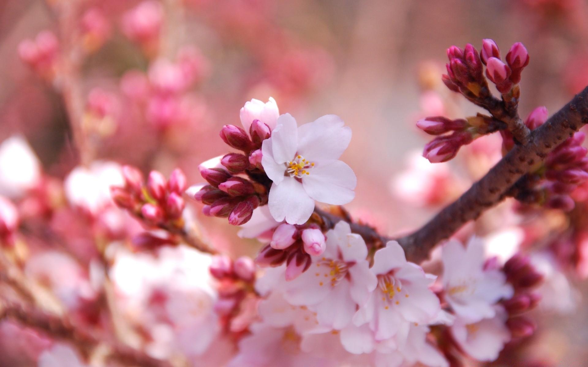 Девушки открытках, картинки цветущая вишня для телефона