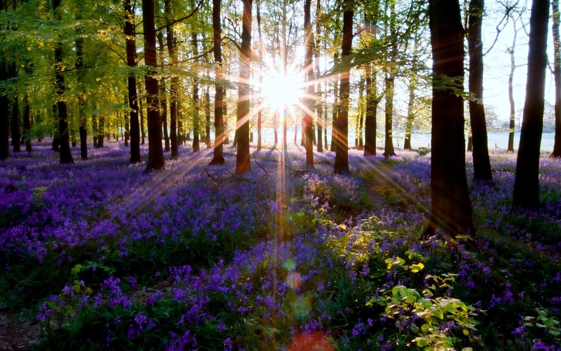 наносится фотообои утро в весеннем лесу чешская крона это