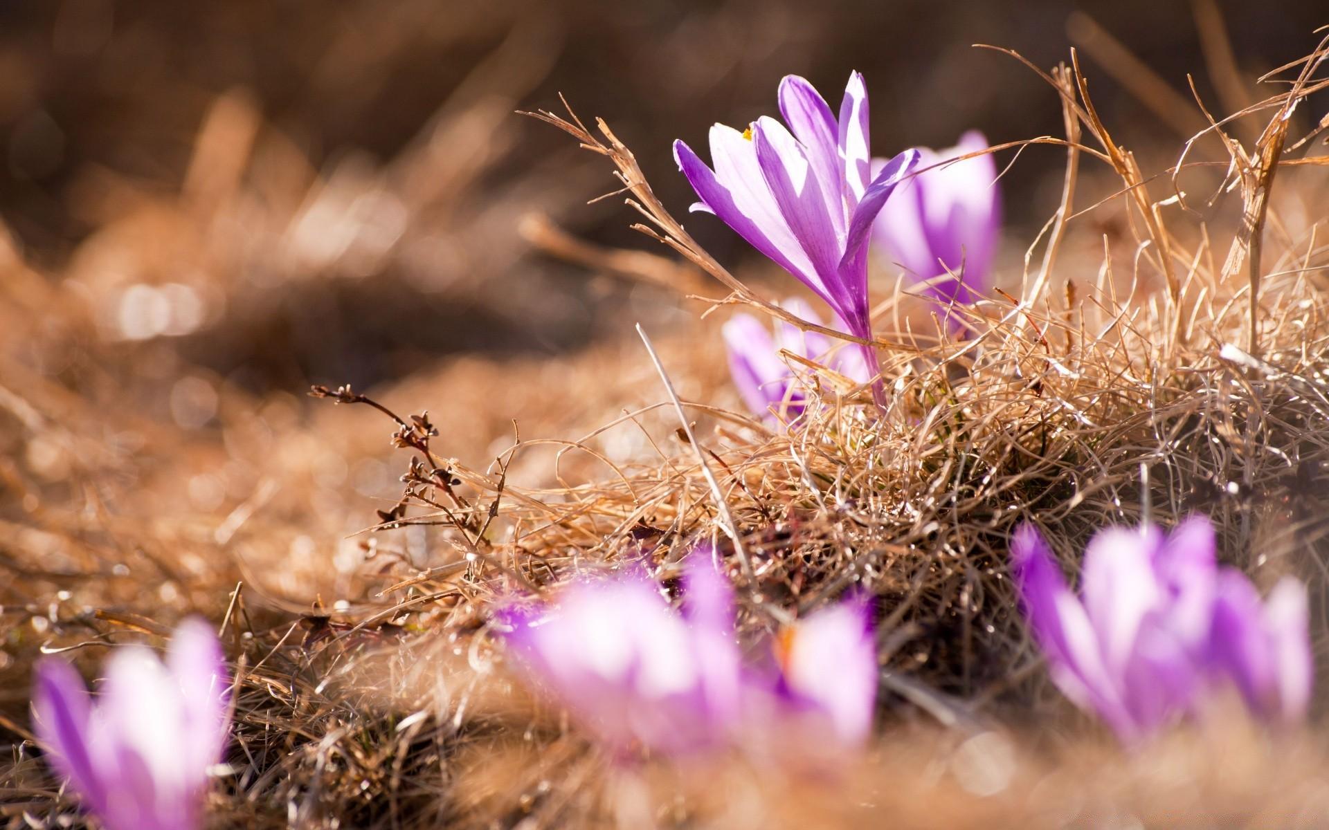 пару картинки весна на рабочий стол во весь очень красиво ухаживал