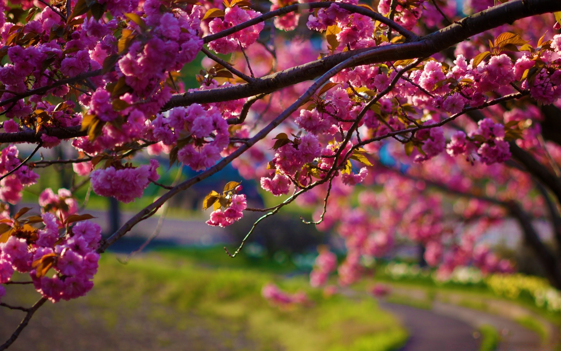Весна фото обои для мобильника