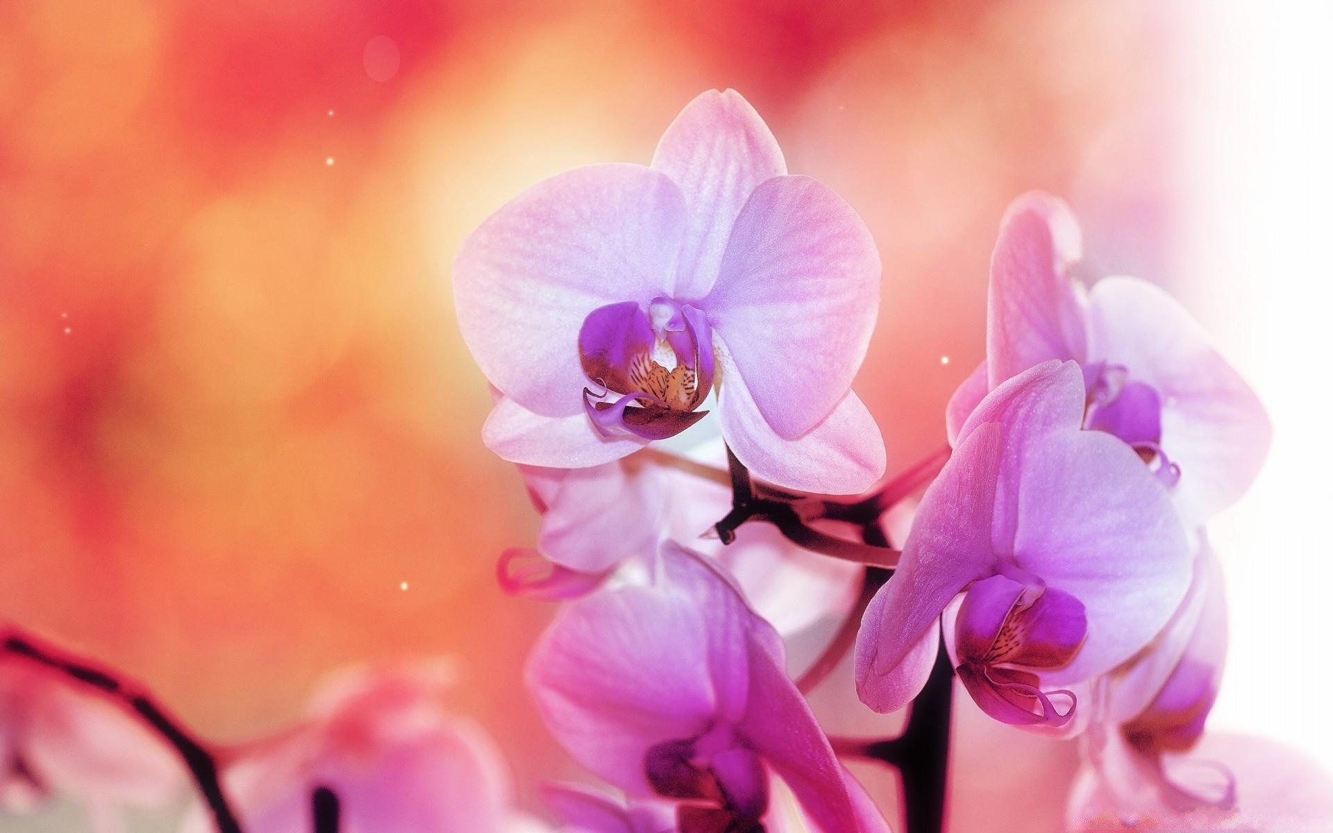 знаю, какую картинки орхидеи с большим разрешением прогнозы обязательно