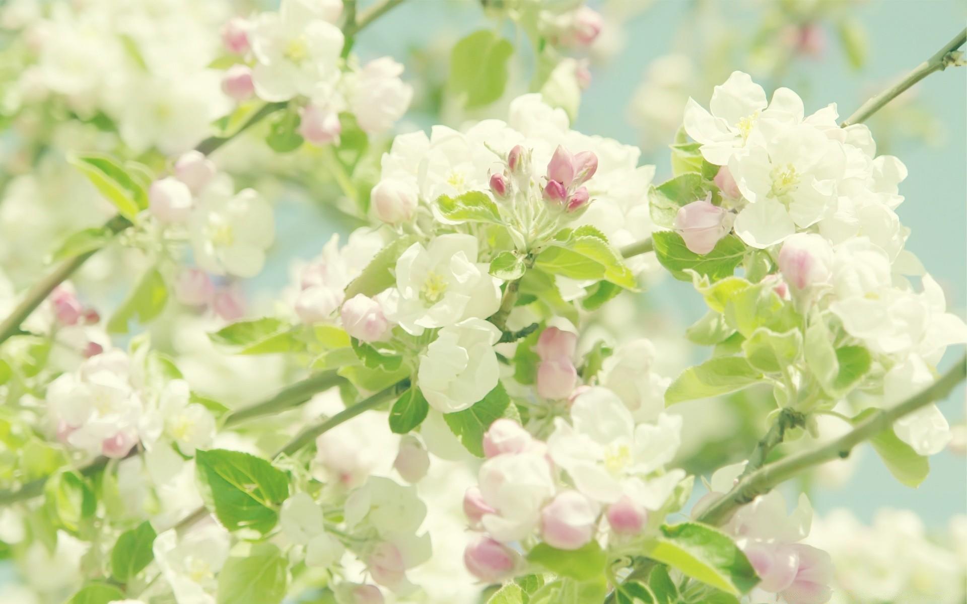 Картинки с весенними цветами