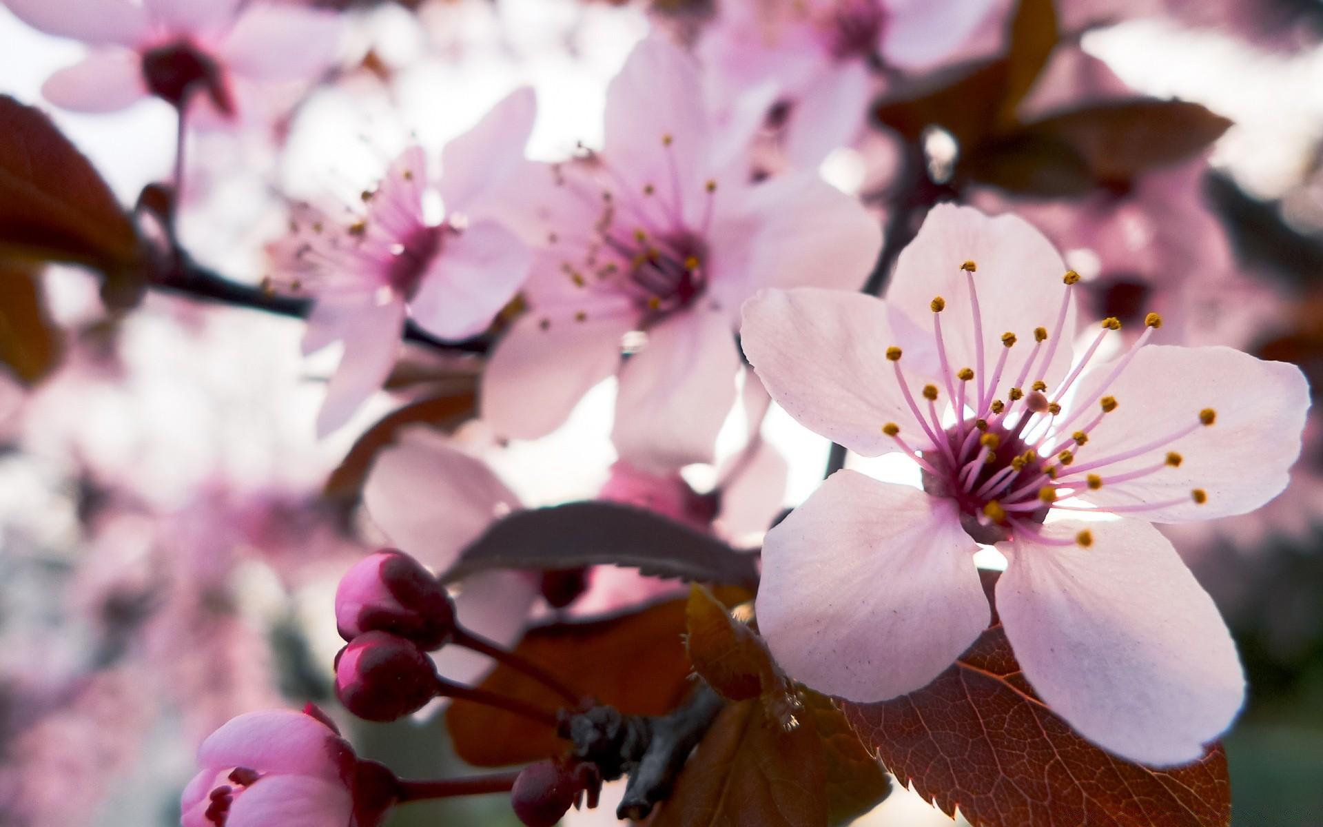 Картинки на рабочий экран телефона весна