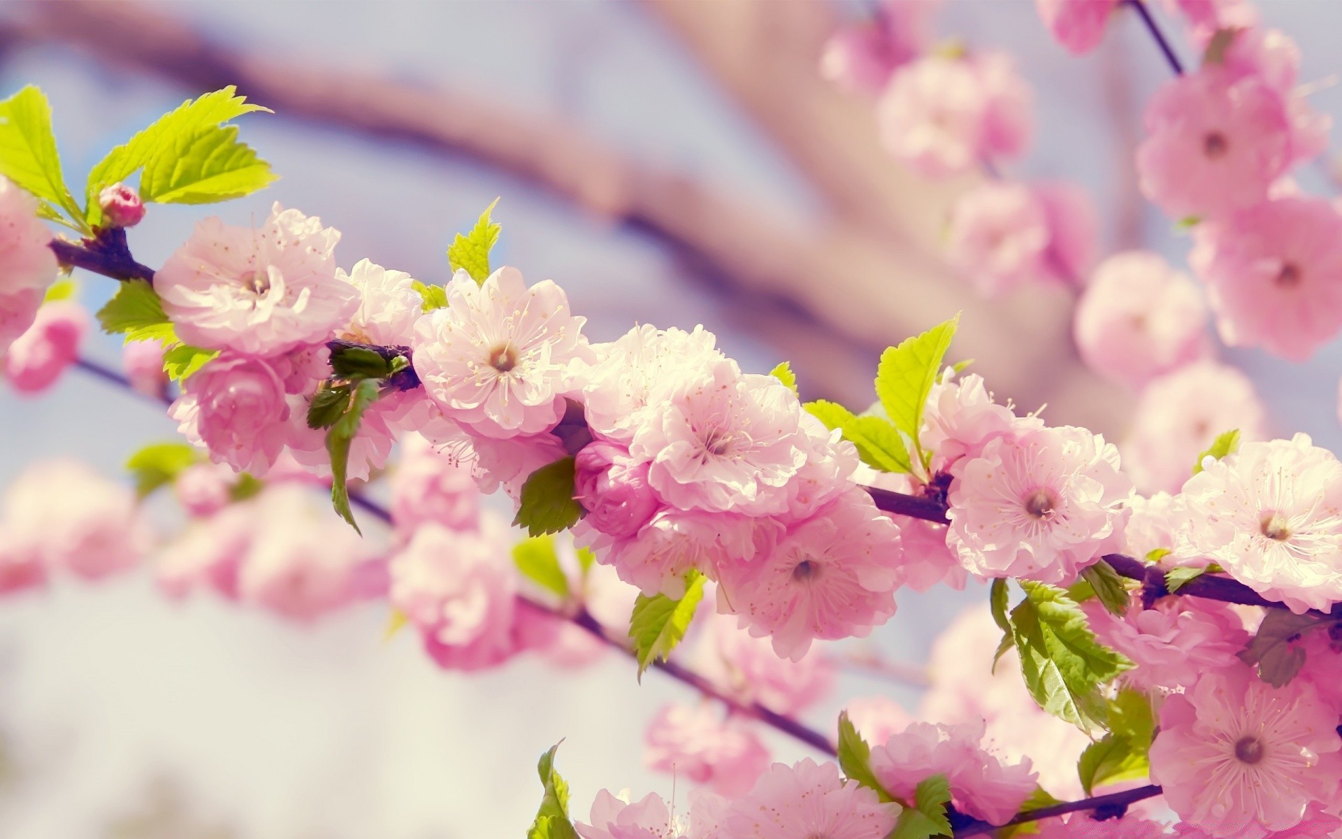 Картинки на рабочий стол большого формата весна