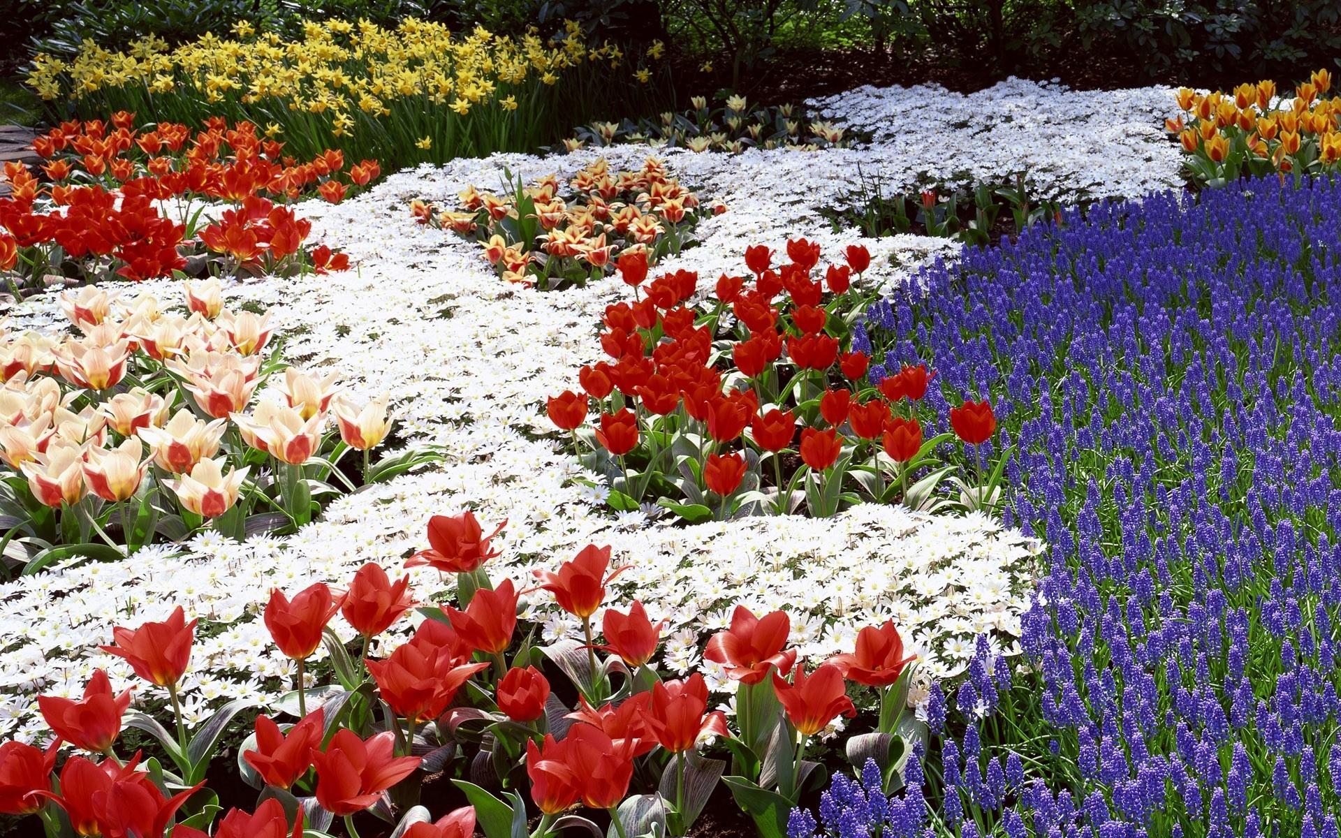 Весенние цветы в парке - скачать обои ...: https://million-wallpapers.ru/wallpaper/vesennie-cvety-v-parke/id...