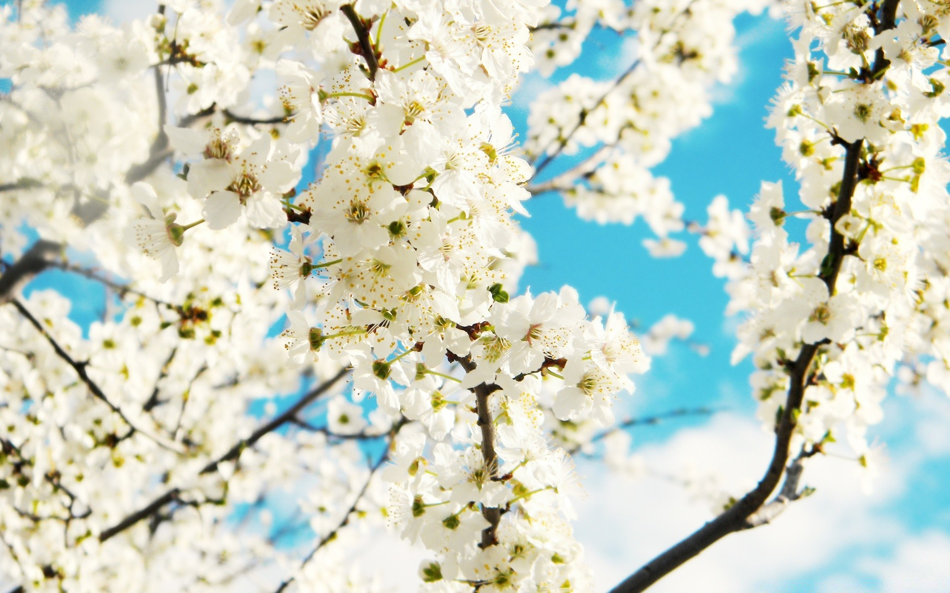 каким большие картинки весна на весь экран дом подмосковье
