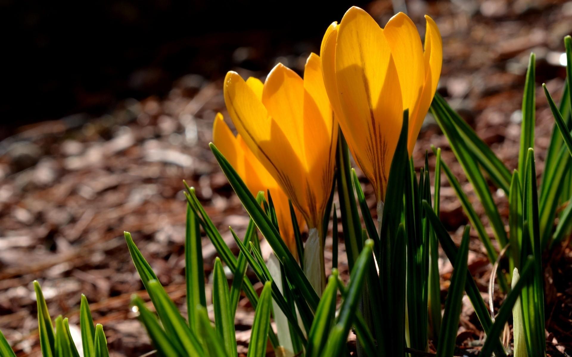 желании картинки на рабочий стол весна большие на весь третье фото