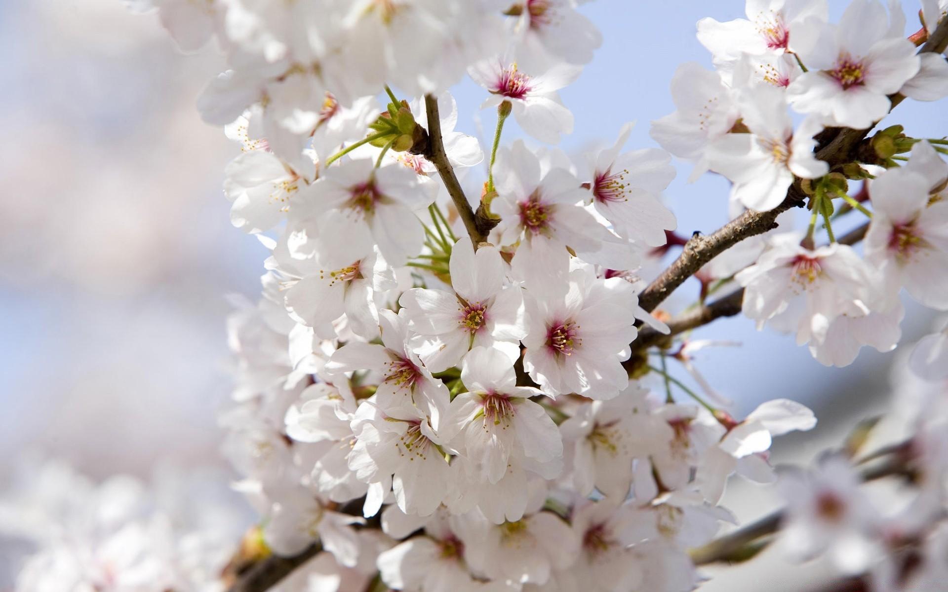 горла, появившаяся весна май фото на рабочий стол готовы помочь