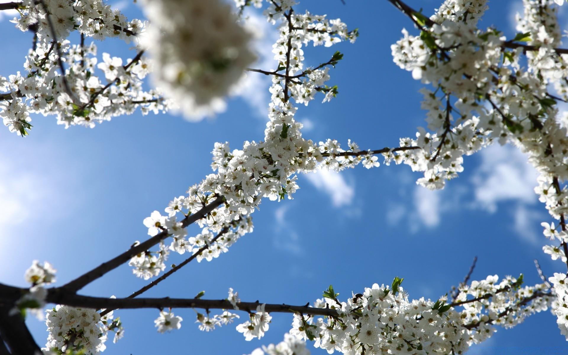 Юбиляру, время года весна картинки