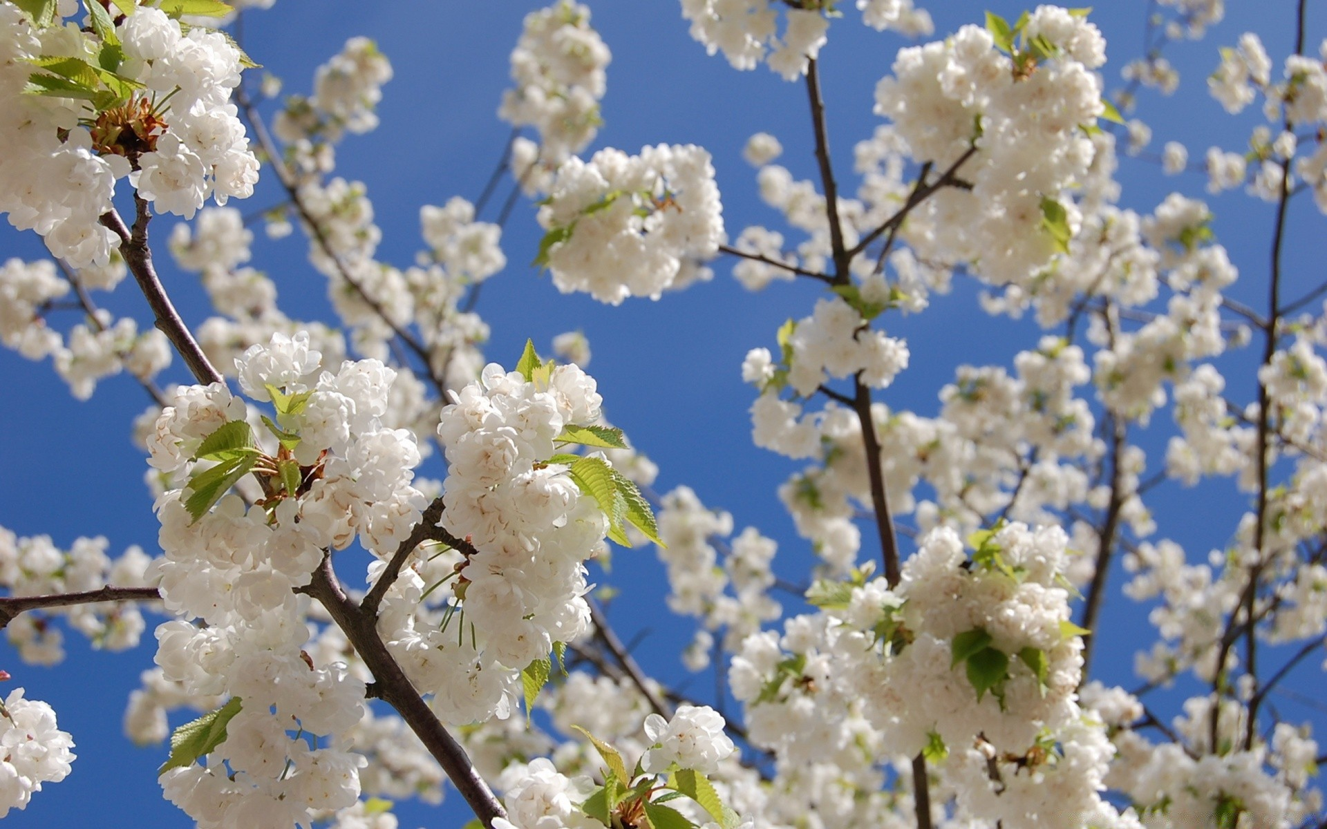 Картинка с весной природа