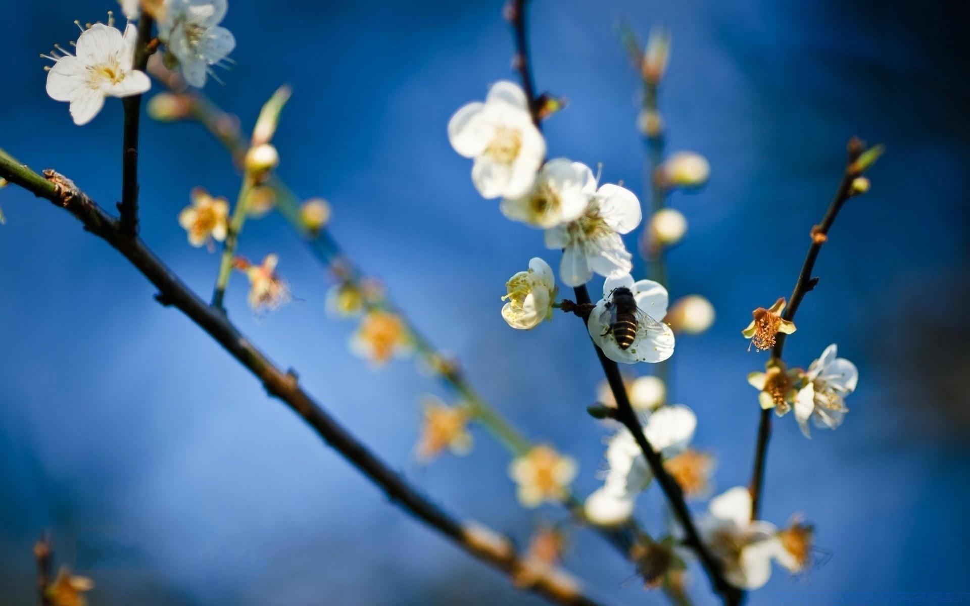 весна фото обои для мобильника если