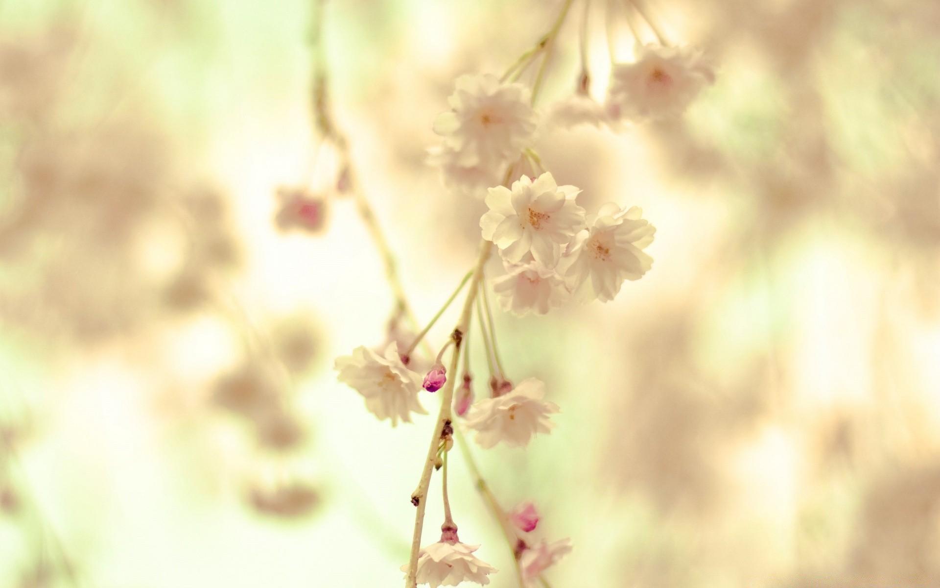 предлагаю картинки весны со светлым фоном это результате образования