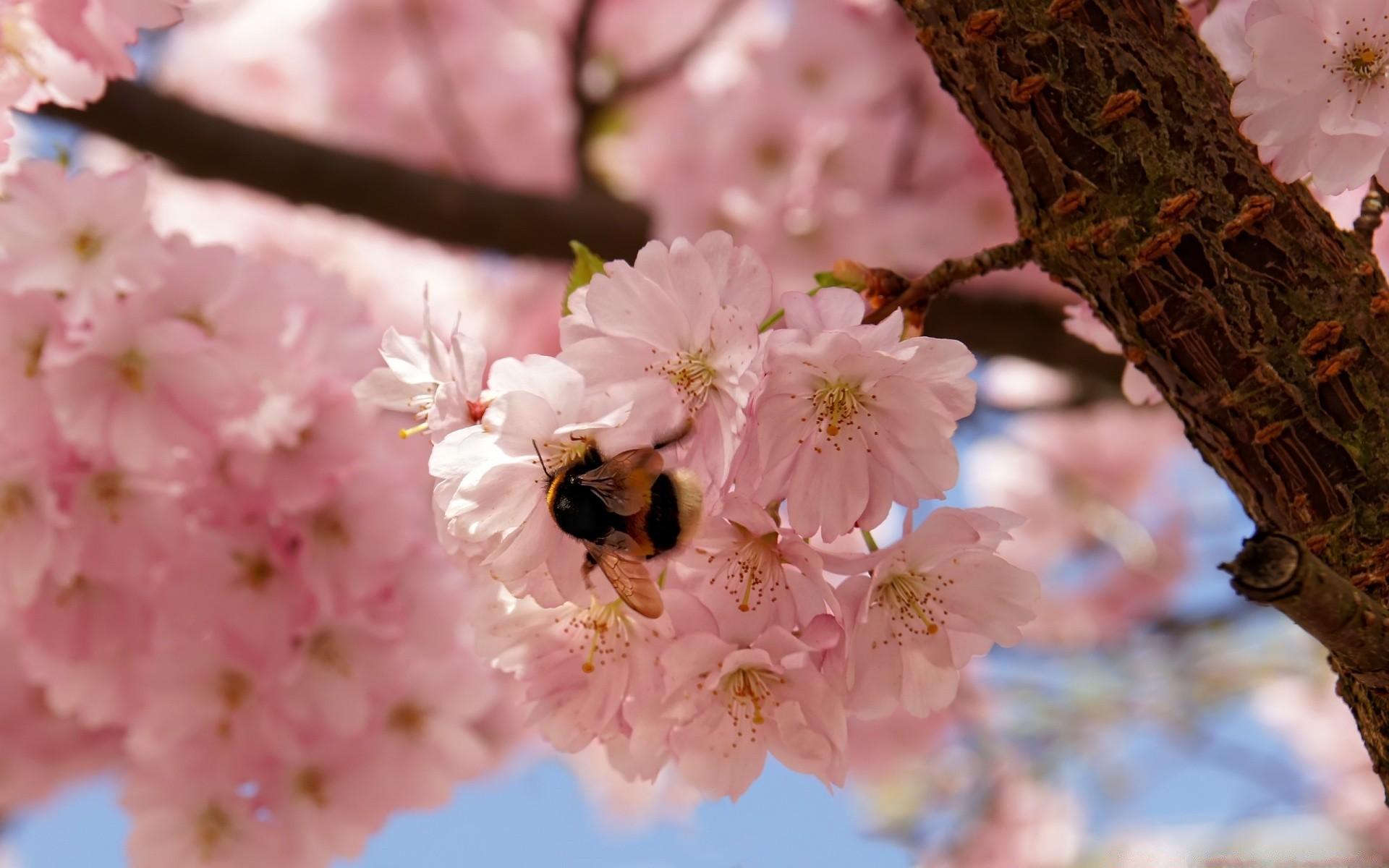 Картинки красивая весна на рабочий стол