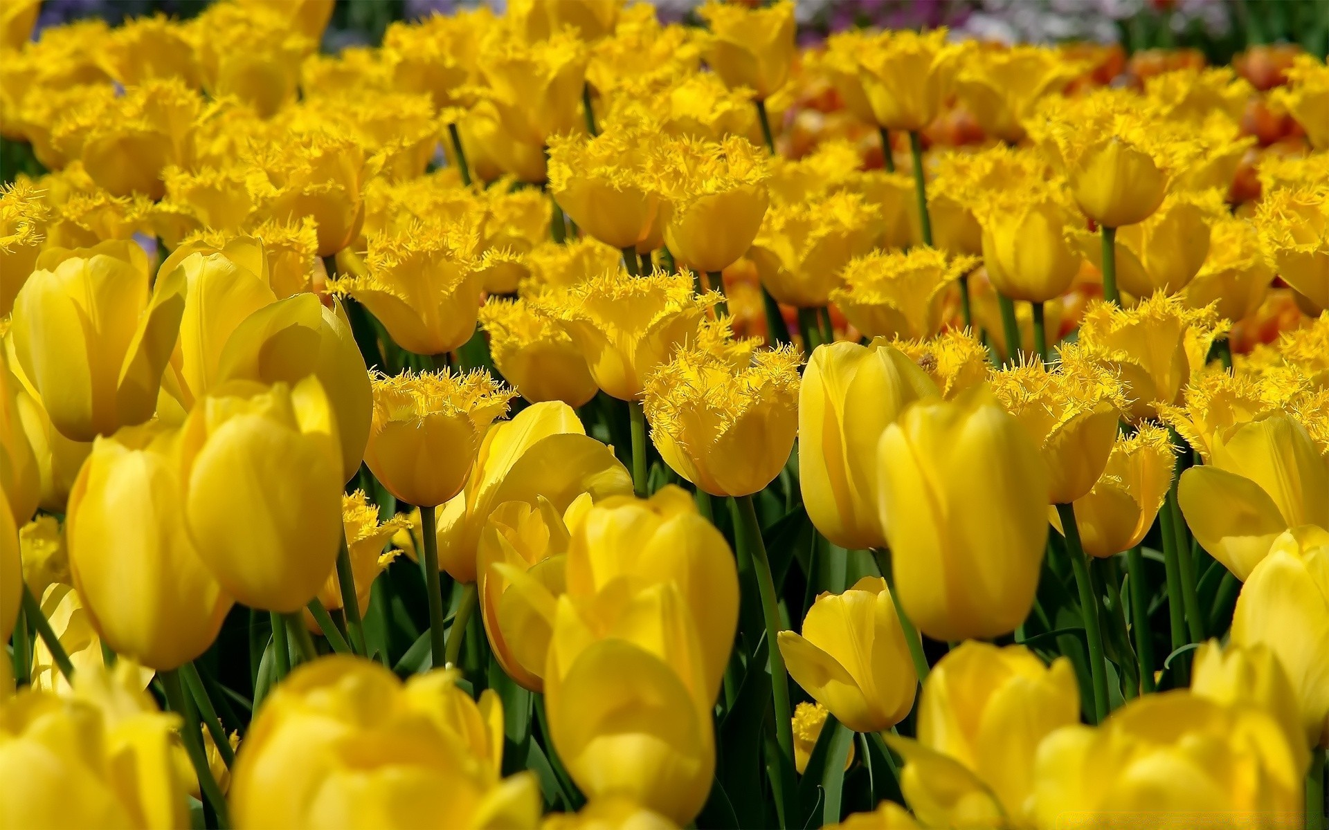 фото на рабочий стол желтые цветы недавнем интервью