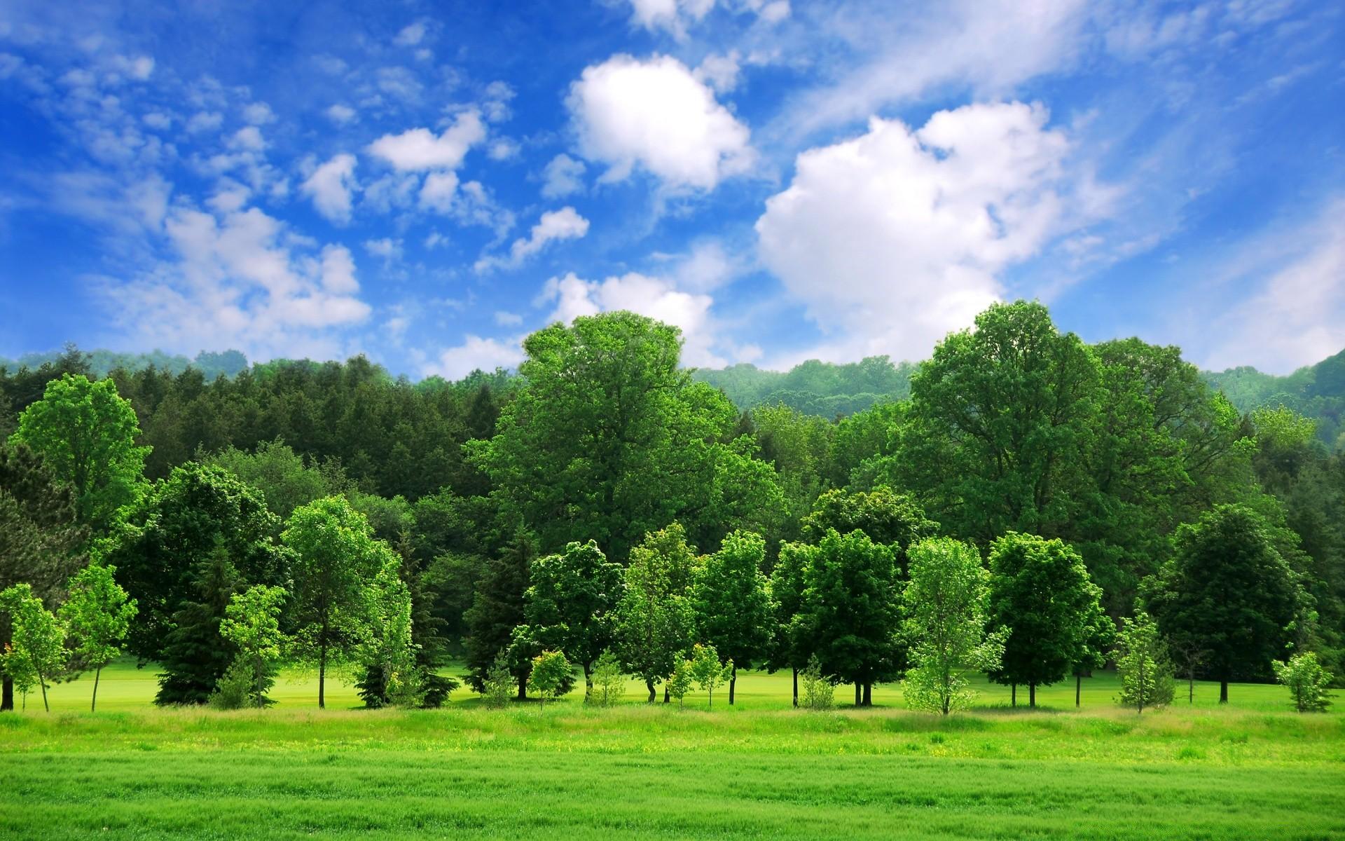Картинки красивые небо природа зеленая деревья, днем народження