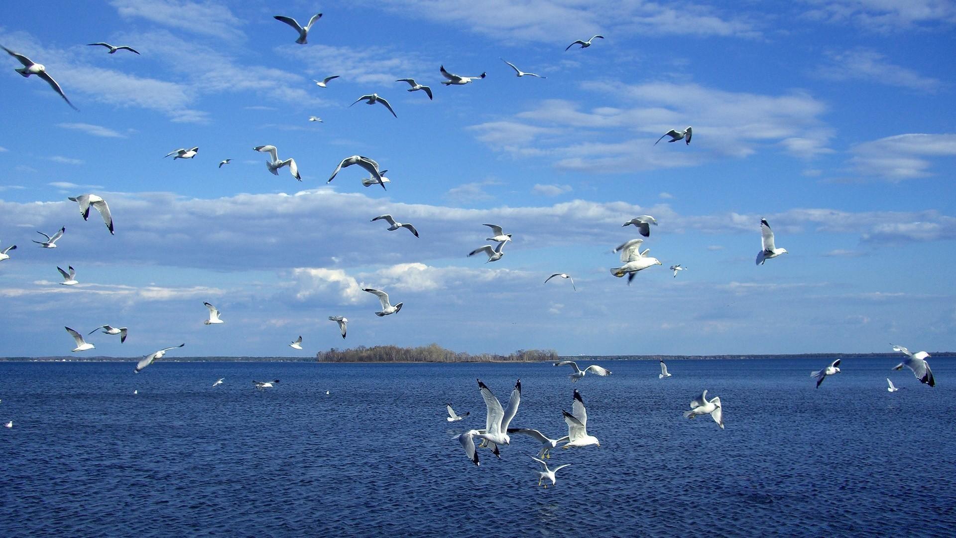 Картинки с чайками и морями и реками, блинами чаем