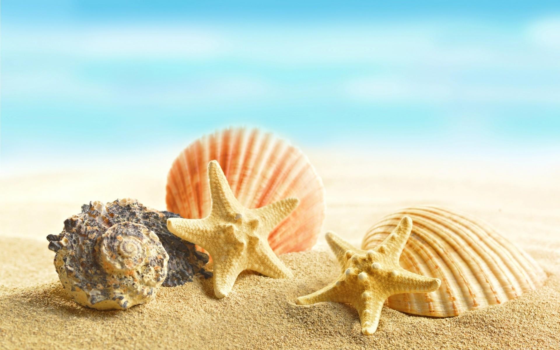 Картинки ракушки на песке, открытка летием