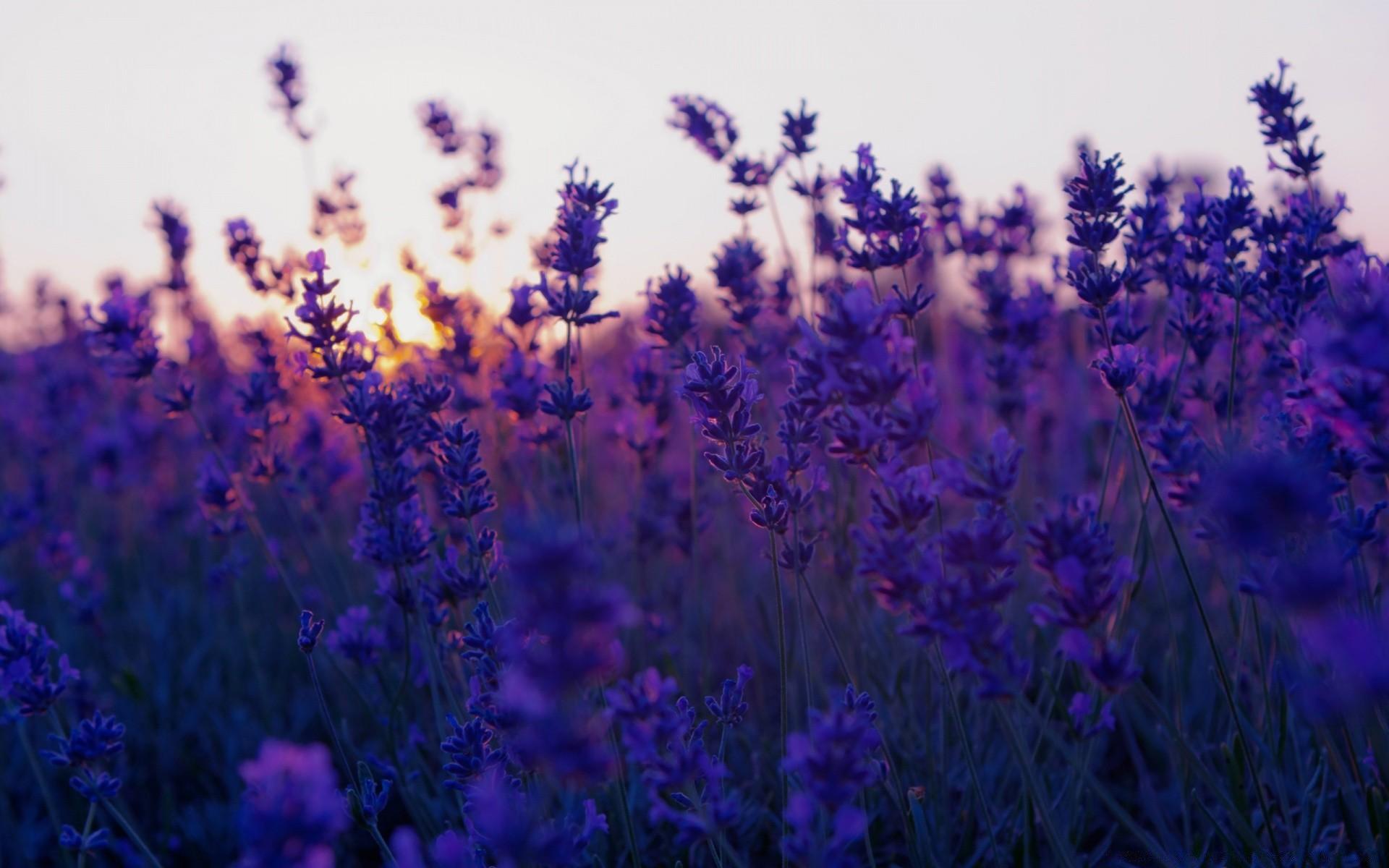 Ребенок, красивые фиолетовые картинки тумблер