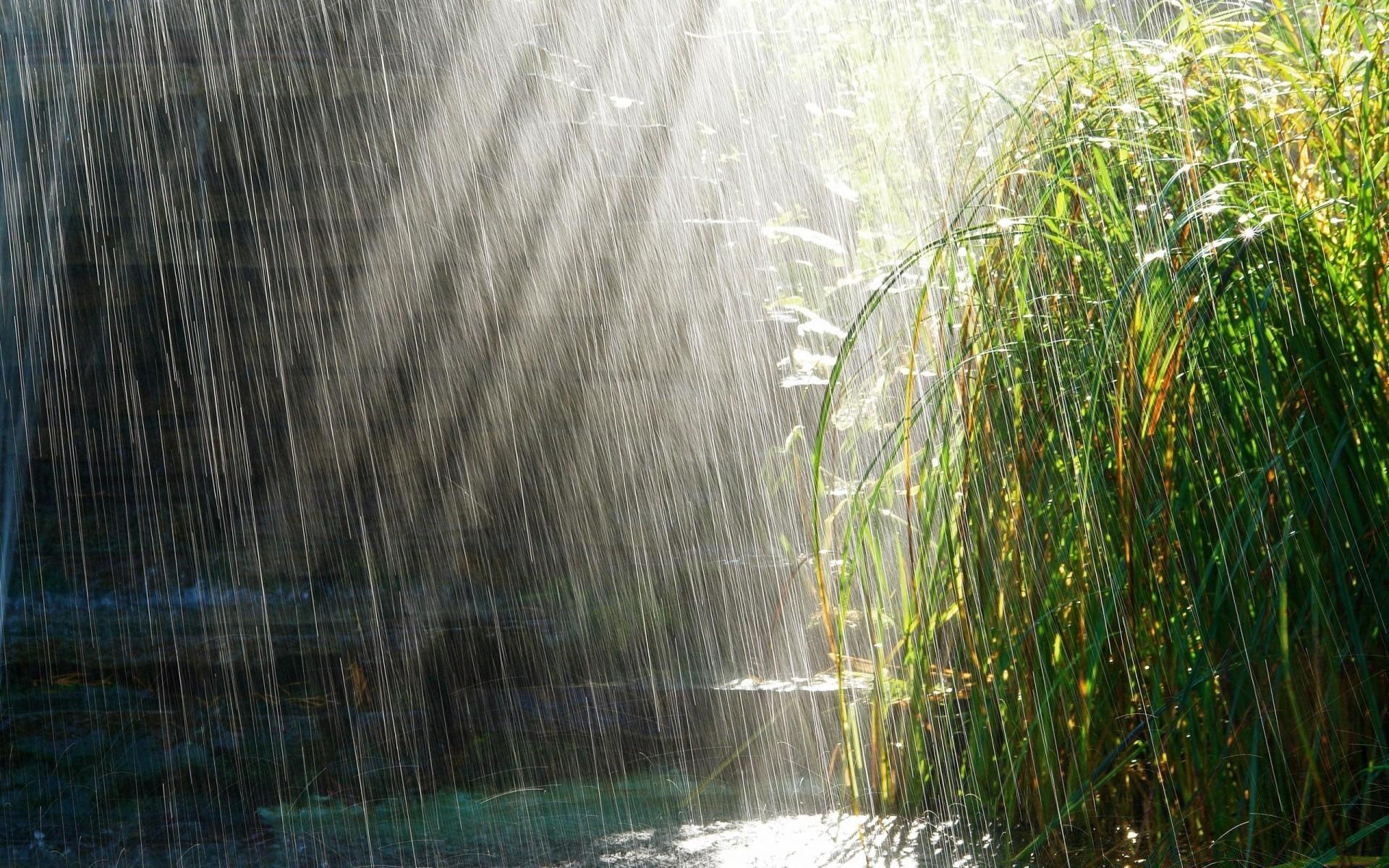 ритуал подействовал картинки на телефон лето дождь высокой