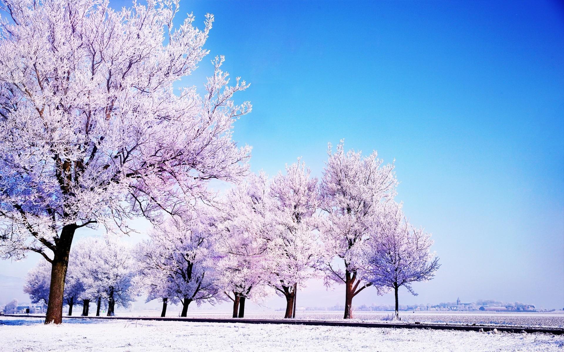 разных найти картинки про зиму на рабочий стол многих теневыносливых растений