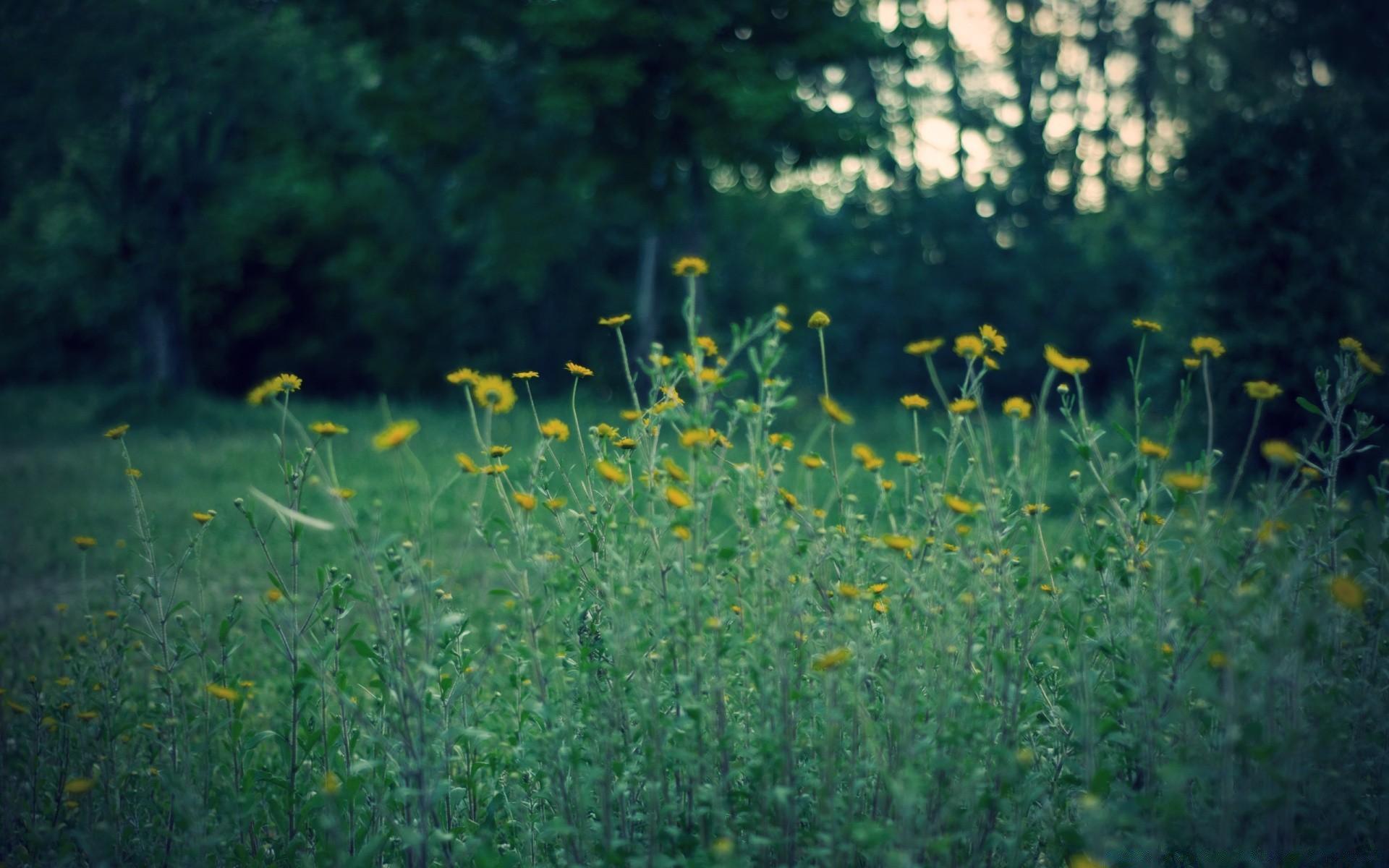 желто зеленые картинки на природе таких штор