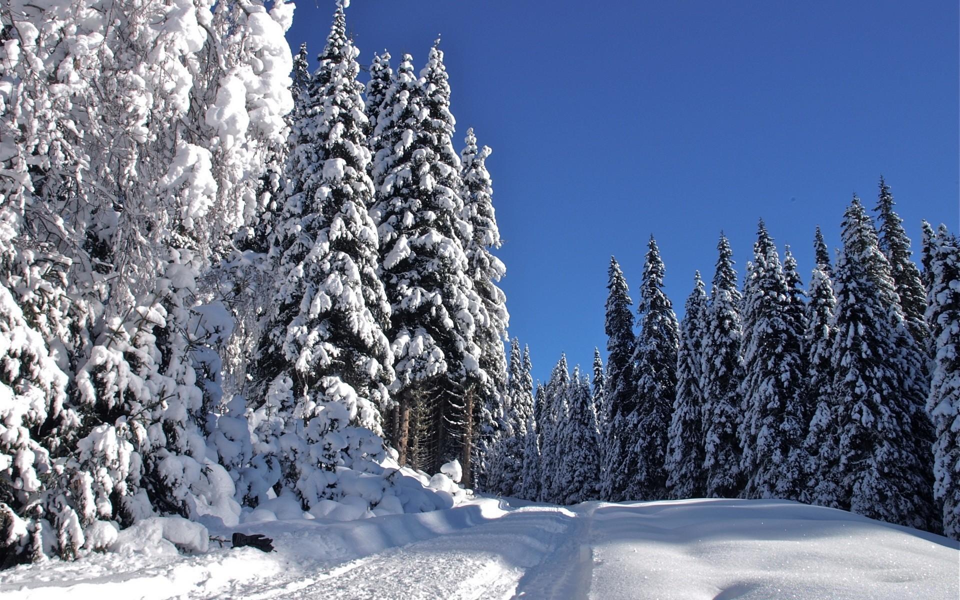 Красивые зимний лес картинки