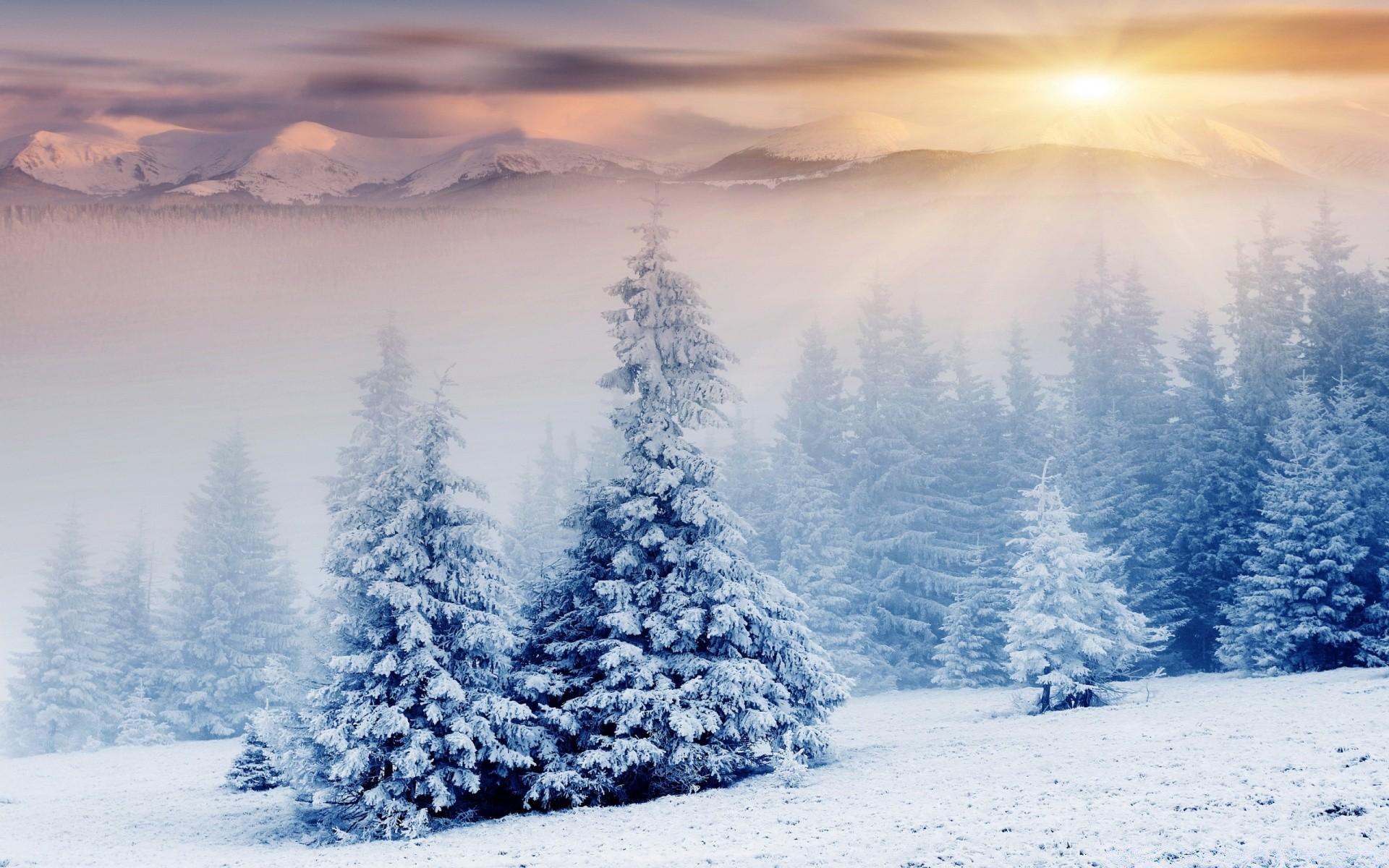 Новый год фото красивые природа, поздравление днем