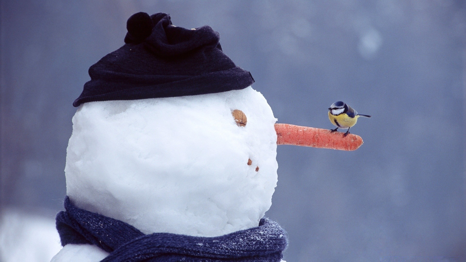 Для выкладки, прикольные картинки на зимнюю