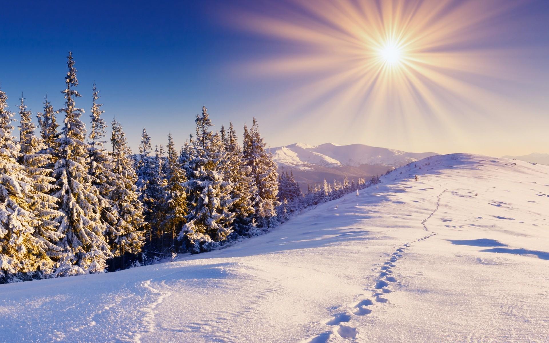 зимний солнечный лес  № 310411 бесплатно