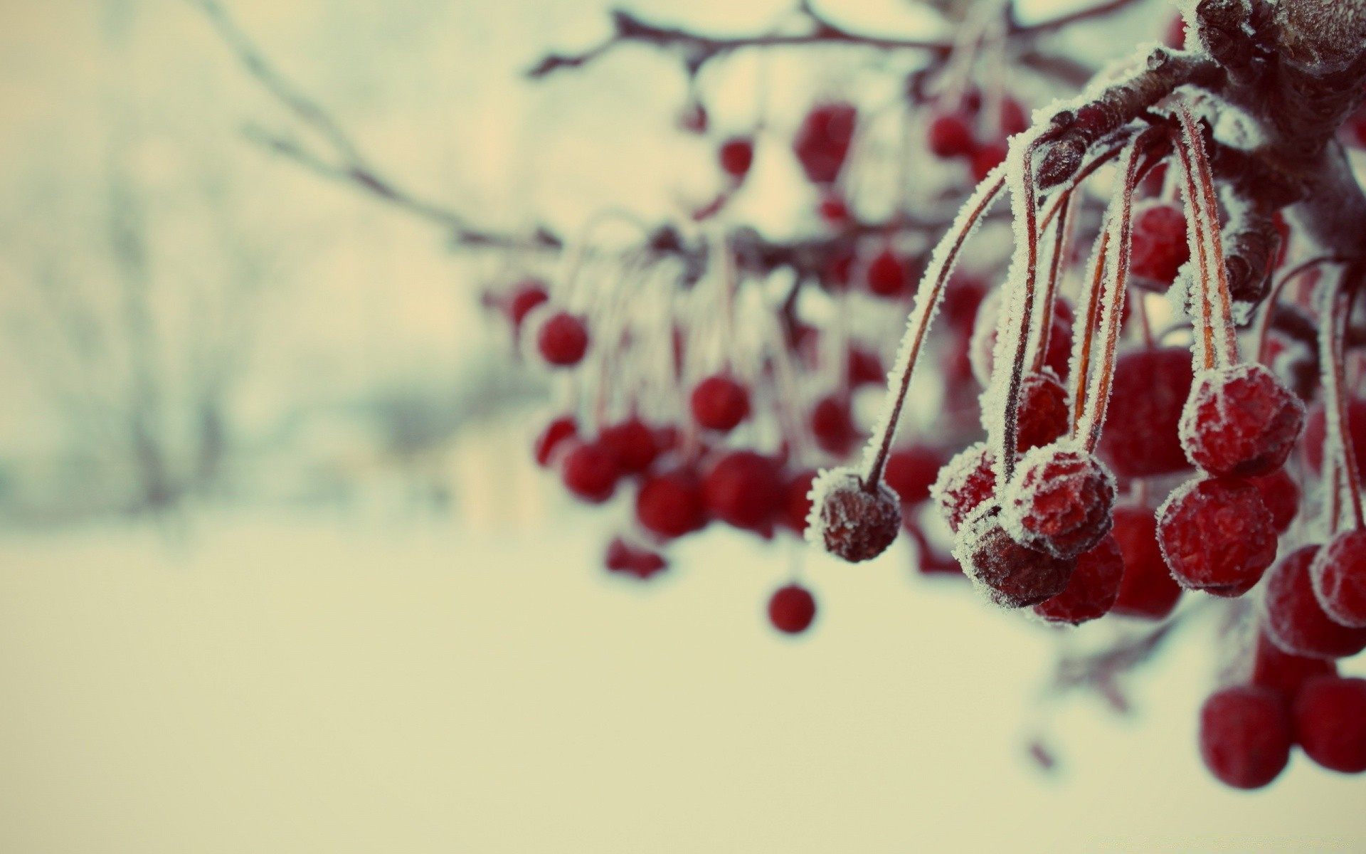Заледеневшие ягоды  № 777660 загрузить