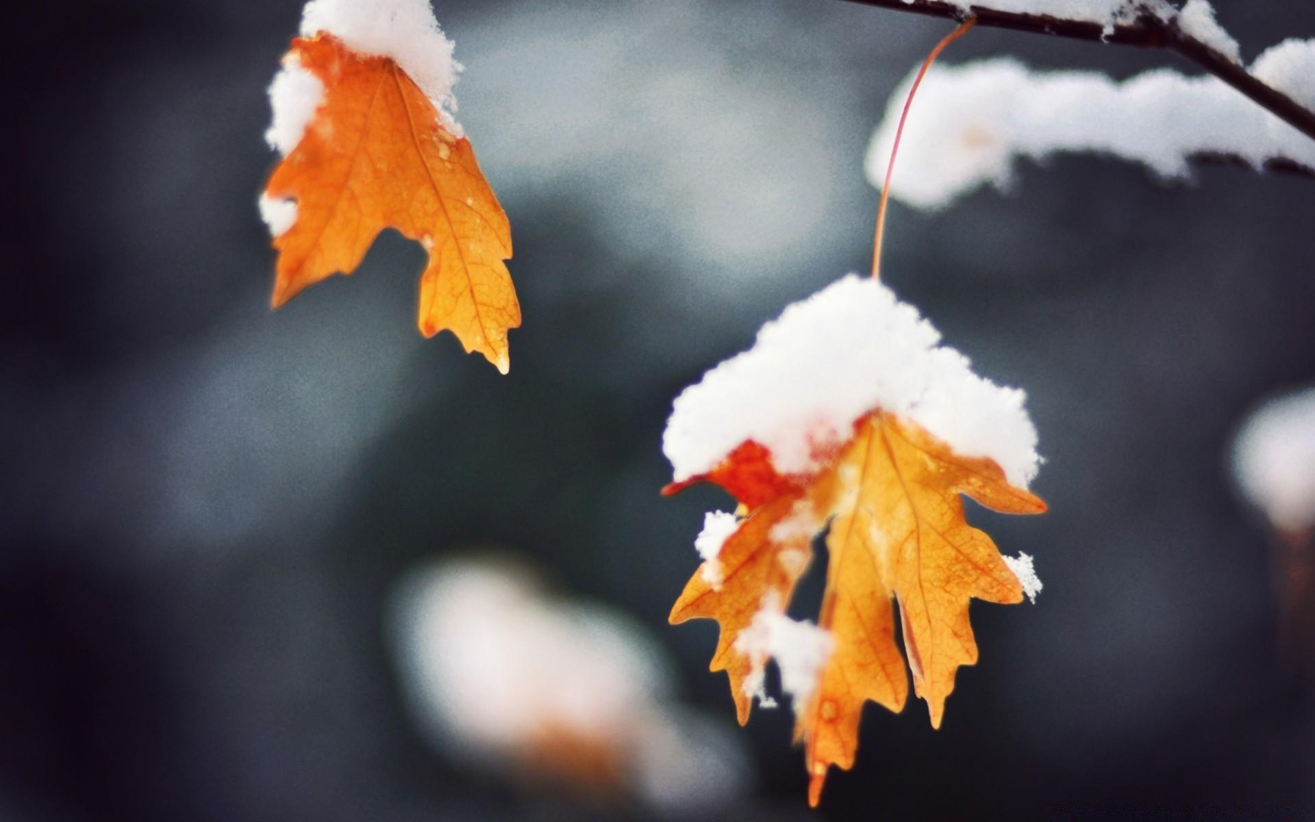 осенне зимние картинки на рабочий стол