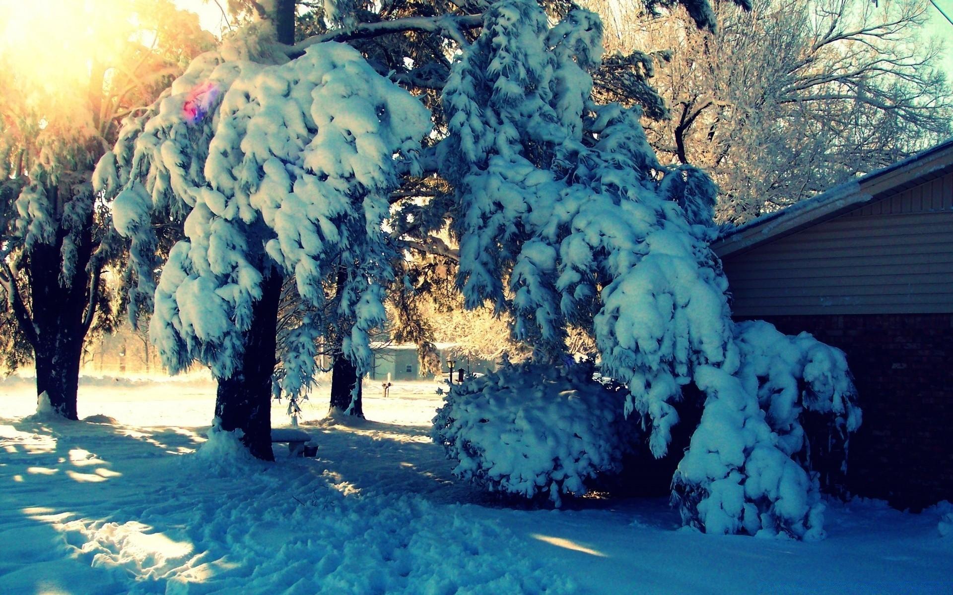 Картинка на рабочий стол деревья зимой