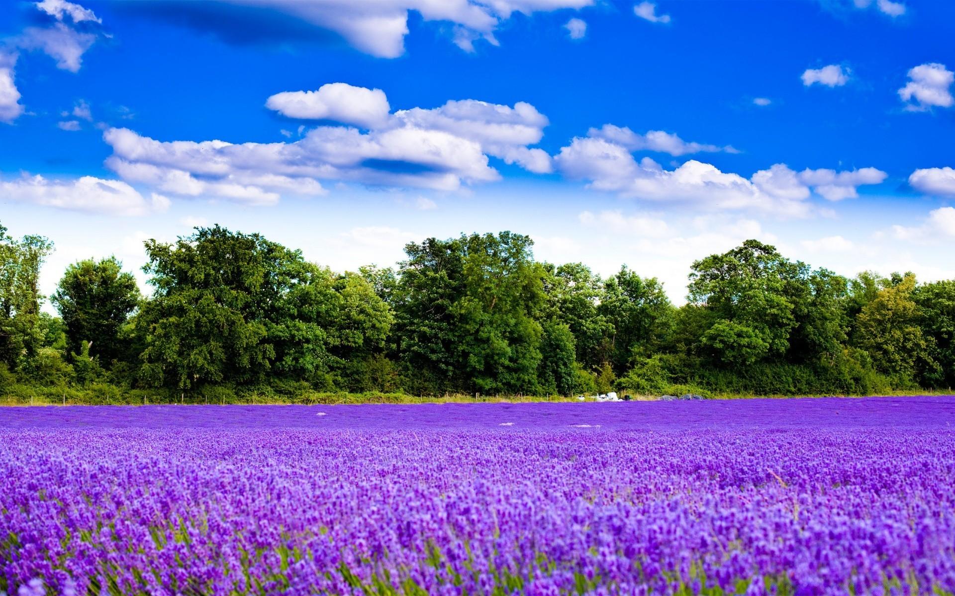 природа поле цветы облака деревья загрузить