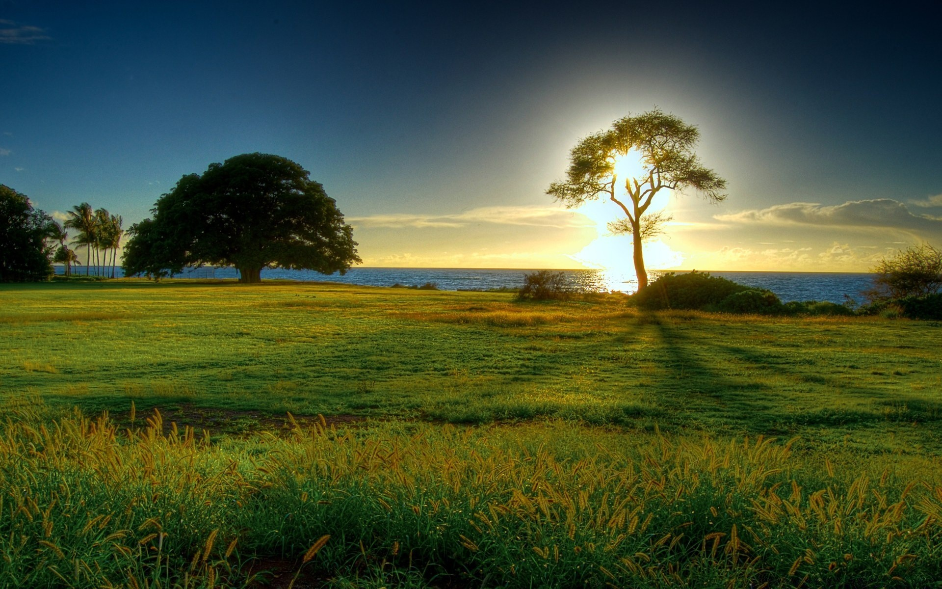 the true nature of trees in the poem the afterlife of trees by brian bartlett The generations of the earth and heavens are this poem's story: how man was first to come to birth, and woman then became his glory before the earth had any trees.