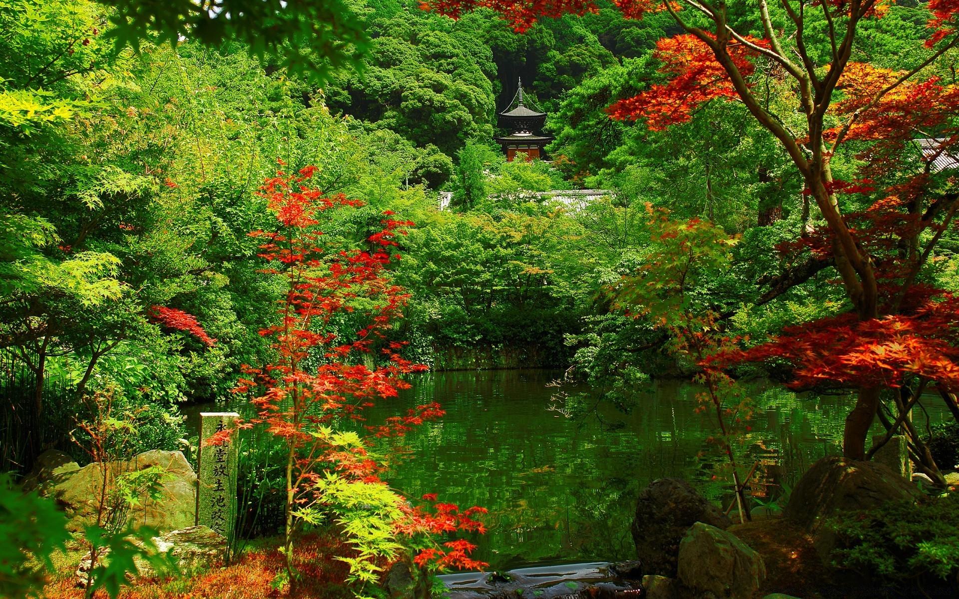 японский сад картинки для рабочего стола области