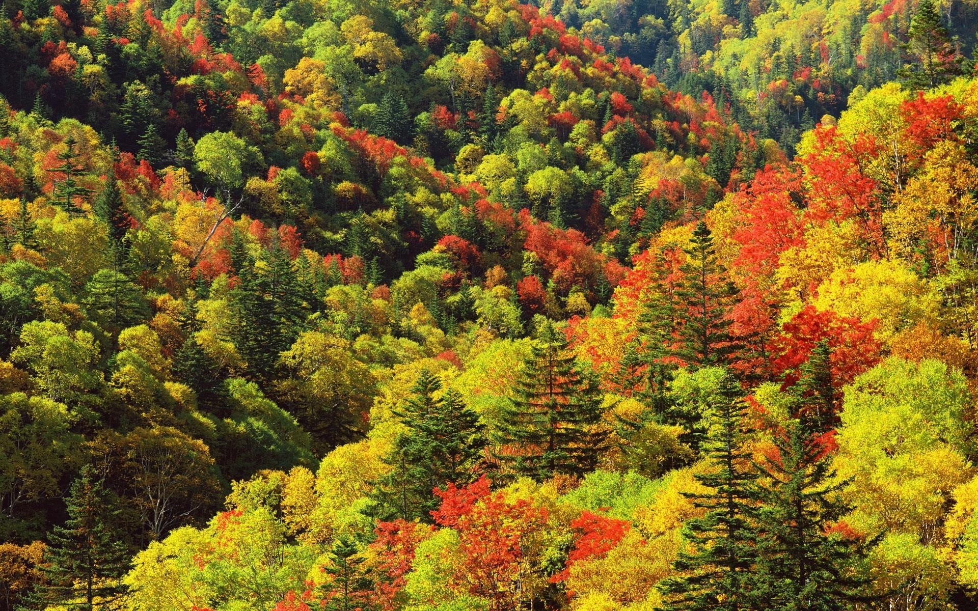 Осенние виды картинки