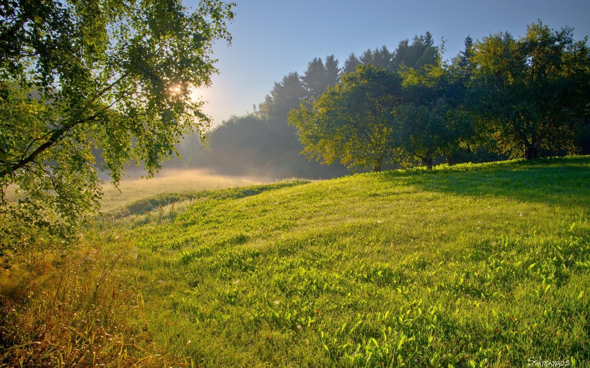 Лес летним утром картинки